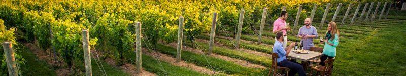 Soiuri de struguri și ce fel de vinuri obținem